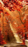 #Sun Rayed Autumn Road- Pinterest