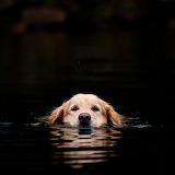 Doggie swim