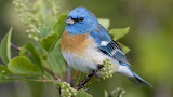 Beautiful birds 41
