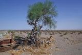 The Amboy Shoe Tree