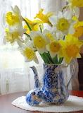 Flowers - Spring Daffodils