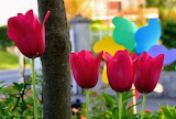Flores 807