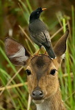 Cool animals nature