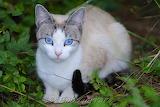 Eye Catching Feral Cat