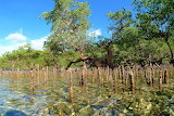 Ankazoberavina - Madagascar