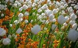 Flower garden plant (319)