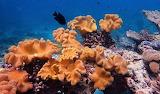 #Soft Coral Noku Maldives Resort