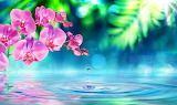 Orchid Water 540999 1280x762