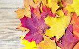 ☺ Autumn leaves...