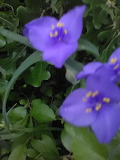 Purple flowers in the park