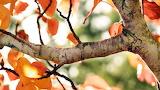 #Fall Tree Branch