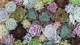 Homepage-succulents-1 1400x.progressive