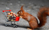 Squirrel-shopcart-nuts-shopping