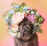 #Pit Bull Flower Power by Sophie Gamand