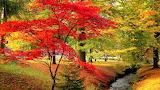 Autumn Scene in Kurpark in Wiesbaden, Germany