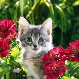 ☺Sweet Kitten...