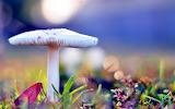 Desktop-mushrooms-beautiful-backgrounds