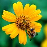 Sunny Flower...