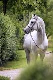 Horses Stables Allen