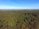 Forstwald