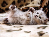 Cute-baby-cats
