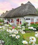 Litle Irish shop