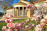 magnolia blossom at Kurhaus in Germany