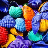 brightly colored shells