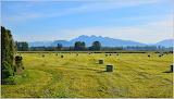 Barnston Island Hay Field