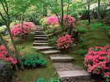 Azaleas-Japanese garden