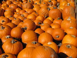 A-pile-of-pumpkins-at-Great-Country-Farms