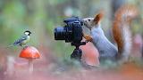 Squirrel taking Picture of Bird