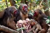 Ultra-rare monkey twins