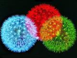 Colors dandelion
