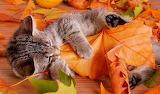 AutumnKitten