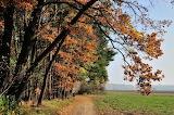 Jesień - foto -K.S.-Altro