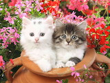 Kittens-and-flowers-3