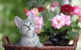 Flowers-cats-kittens-babies-cute-face-eyes-wallpaper-1