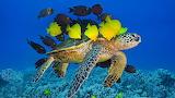 TurtleNTang ROW