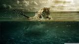 Tiger-river-inside-clouds