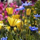 *Stunning Flowers...