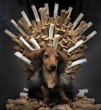 Game of Bones Dog
