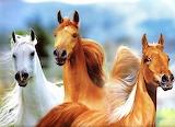 🐎Dreamy Horses...