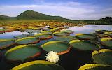#Pantanal Wetlands Brazil