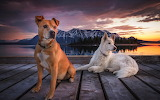 Beautiful Dogs