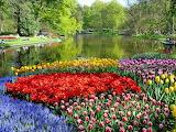 Keukenhof-park-spring