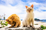 Two cats enjoying the beach