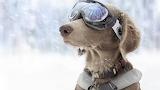 Snow-patrol-glasses-dog-collar
