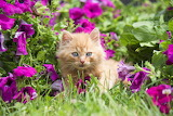 Kitten amongst flowers