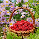 ☺ Raspberries among pretty flowers...